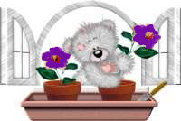 Purple window box flowers and bear image