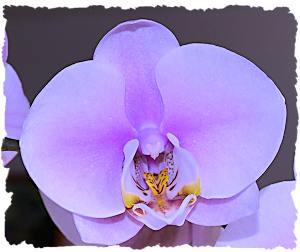 Purple wedding flowers orchid picture